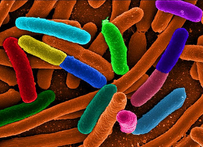 Microbiota intestinale e obesità: una relazione sorprendente