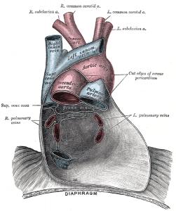 Il costo sociale della stenosi aortica: una malattia sottovalutata