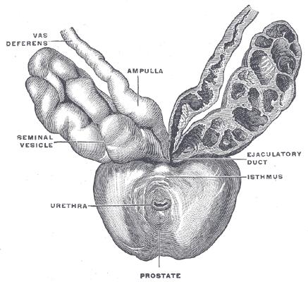 """A Bergamo, il 20 novembre 2015,  """"Il tumore della prostata: stato dell'arte e nuove prospettive"""""""