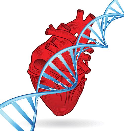 Sviluppo di un test di sequenziamento  multiplo per le cardiopatie ereditarie