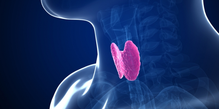 La salute della tiroide: dal bambino all'anziano