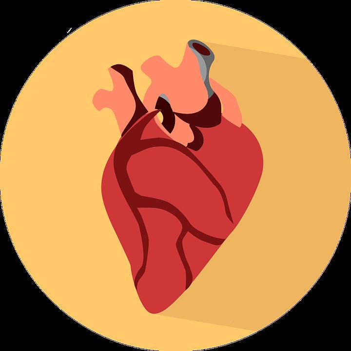 HCV, non solo fegato: complicanze cardiovascolari