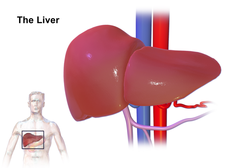 Epatite da HCV ed epatocarcinoma: i rischi
