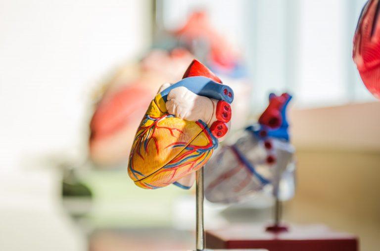Sindrome del cuore sinistro ipoplasico: definizione, trattamento e follow-up